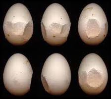 Hội chứng giảm đẻ (egg drop syndrome)